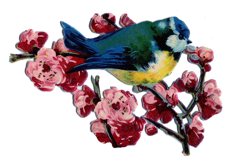 http://thegraphicsfairy.com/wp-content/uploads/blogger/-PkqLCfUFBP4/T7KsDV0DPeI/AAAAAAAAR20/u-u4ZAdkSSc/s1600/bluebird-blossoms-Graphics-Fairy.jpg