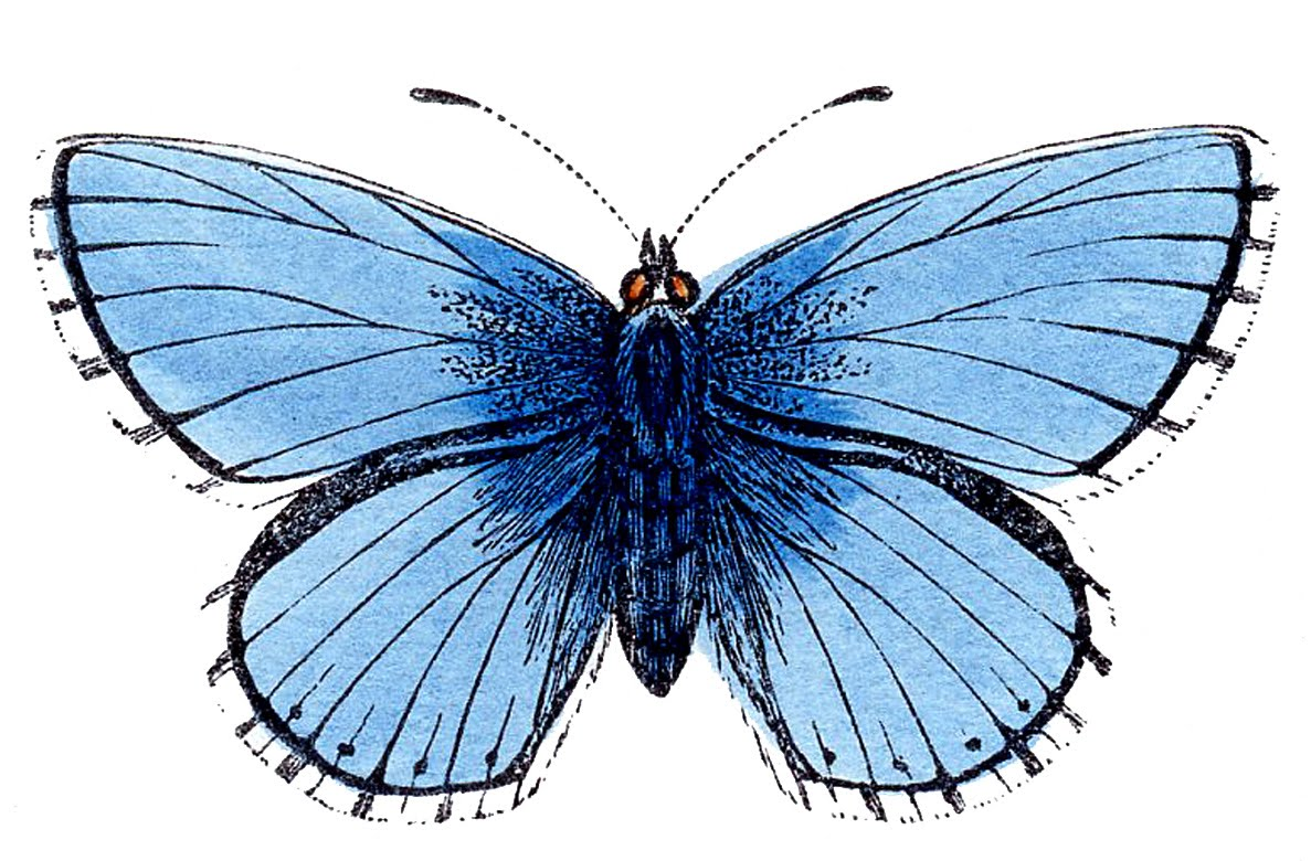 free printable butterfly clip art - photo #28