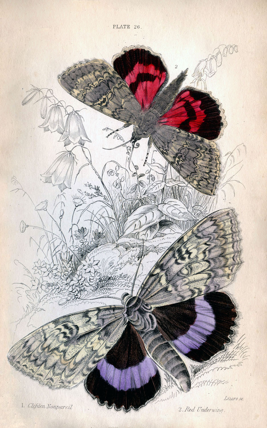 It is a picture of Exceptional Free Printable Butterflies
