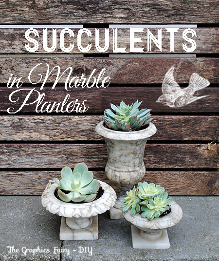 DIY - Plant Succulents in Vintage Marble Planters