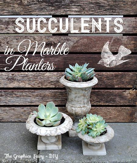 DIY - Plant Succulents in Vintage Marble Planters