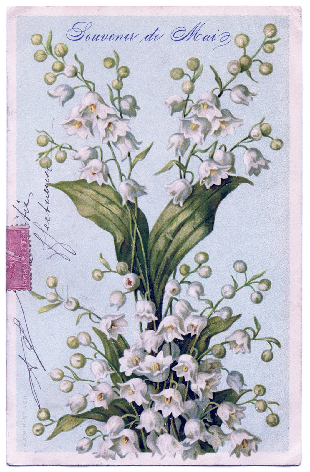 Gorgeous french lily of the valley image the graphics fairy gorgeous french lily of the valley image izmirmasajfo Images