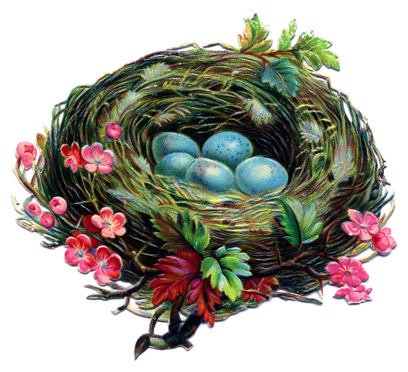 Pretty Nest With Blue Eggs