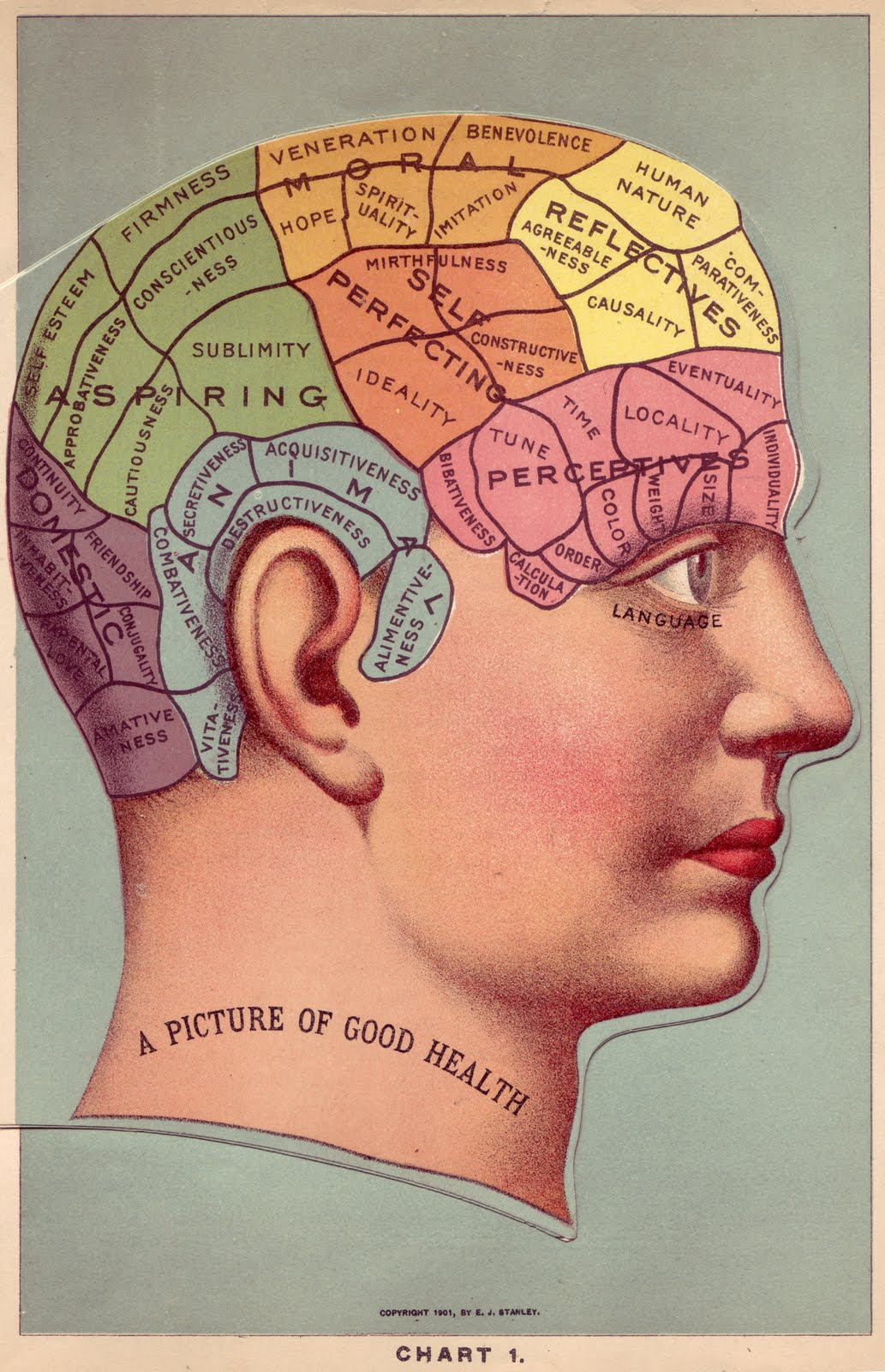 Vintage Clip Art Phrenology Head In Color The Graphics