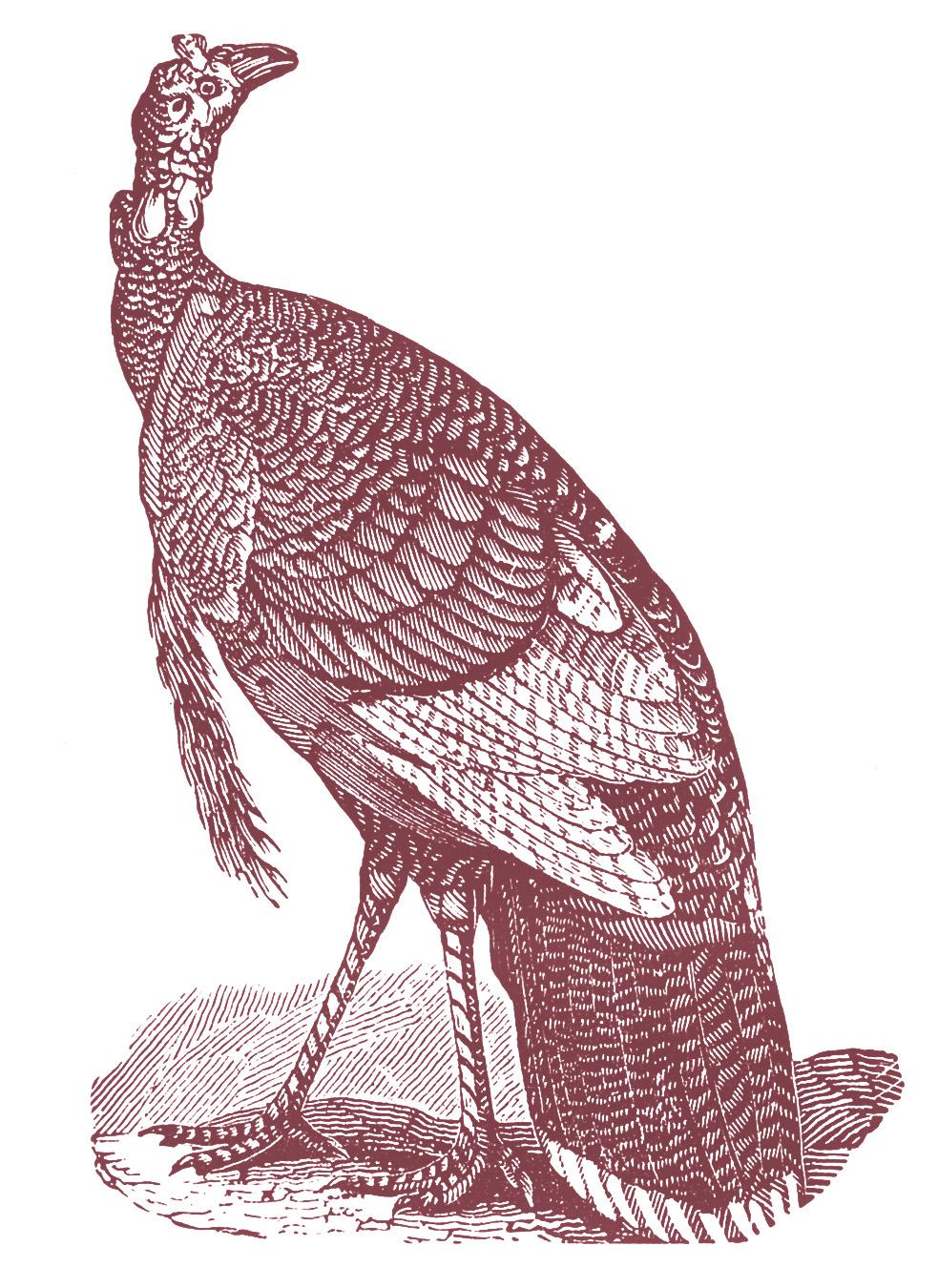 Vintage Thanksgiving Clip Art - Turkeys - The Graphics Fairy