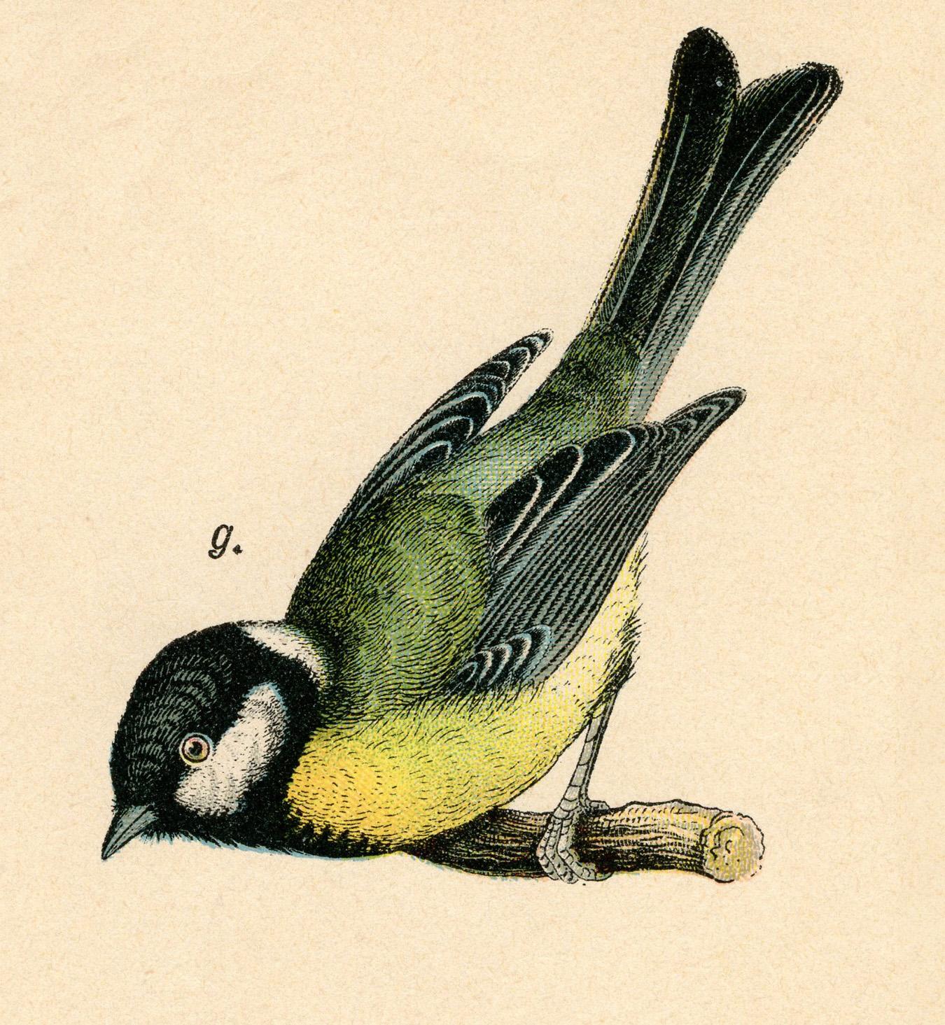 Vintage Bird Clipart 3