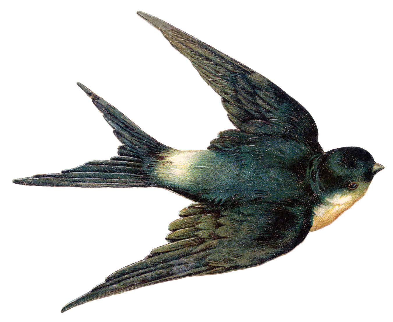 Antique Swallow 8