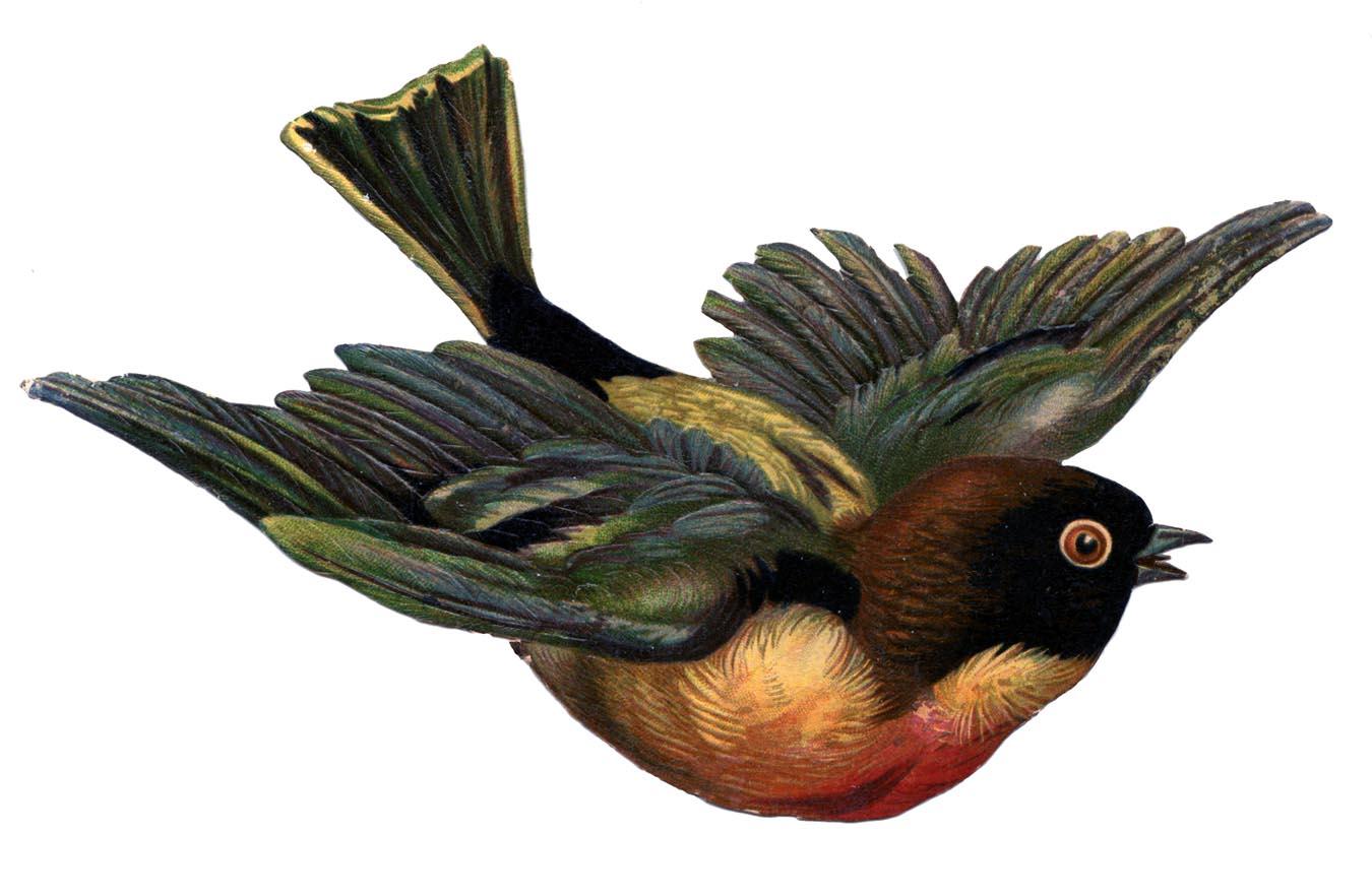 Victorian Scrap Clip Art - Flying Bird - The Graphics Fairy