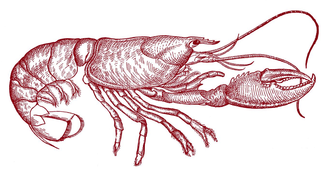 Vintage Clip Art - Lobster Diagram - The Graphics Fairy