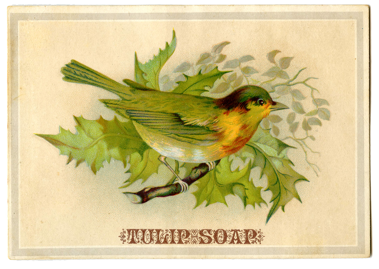 Vintage Advertising Graphic Bird On Holly Branch The