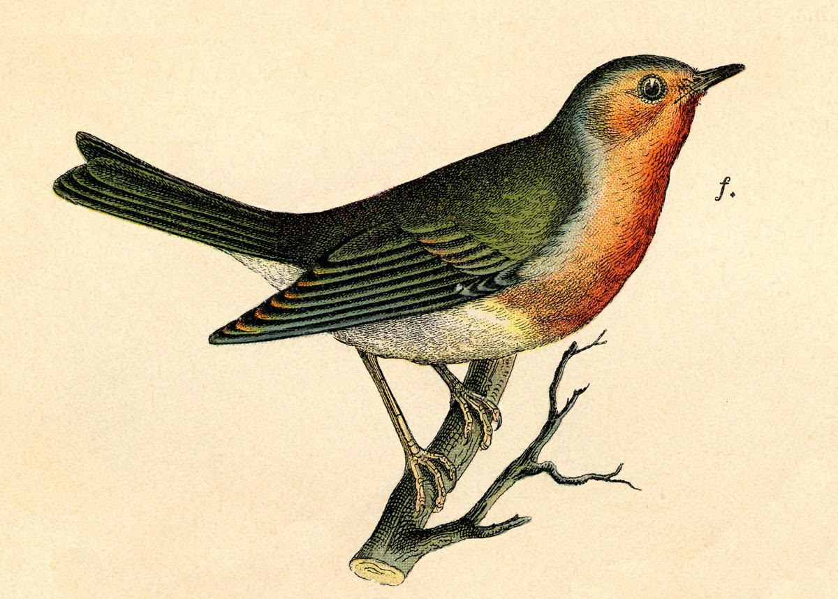 Vintage Graphic Image  Wonderful Robin On Branch The Graphics Fairy