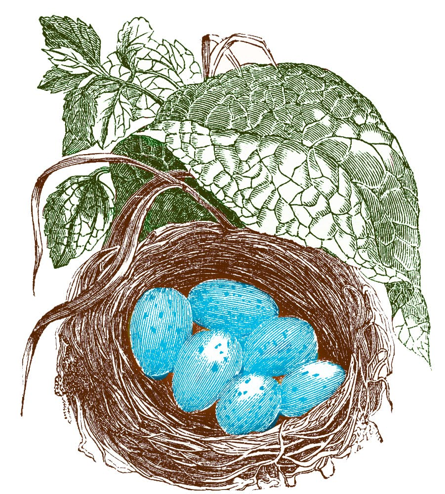 Engraved Nest With Eggs