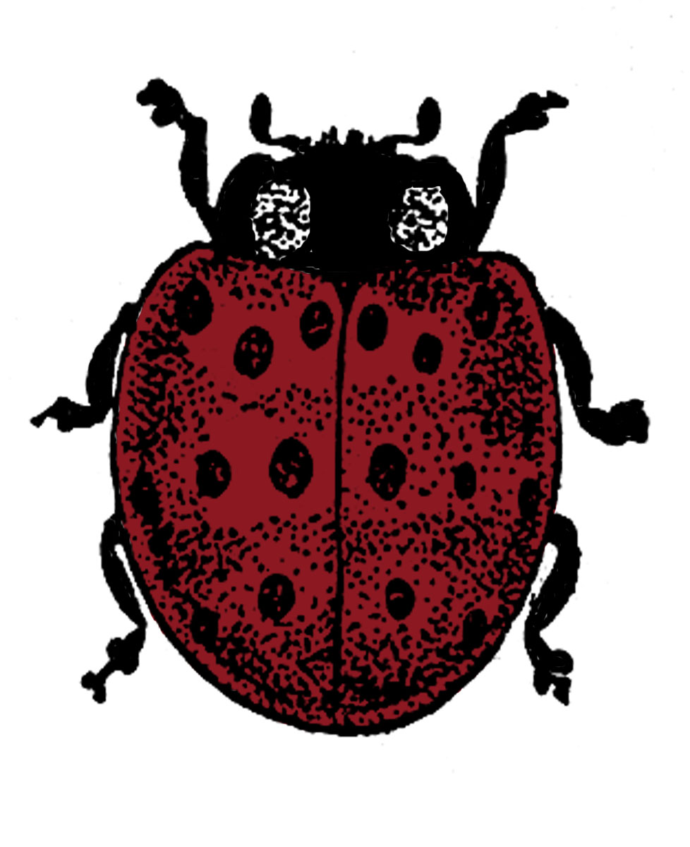 ladybug vector hawaii tattoo - photo #4