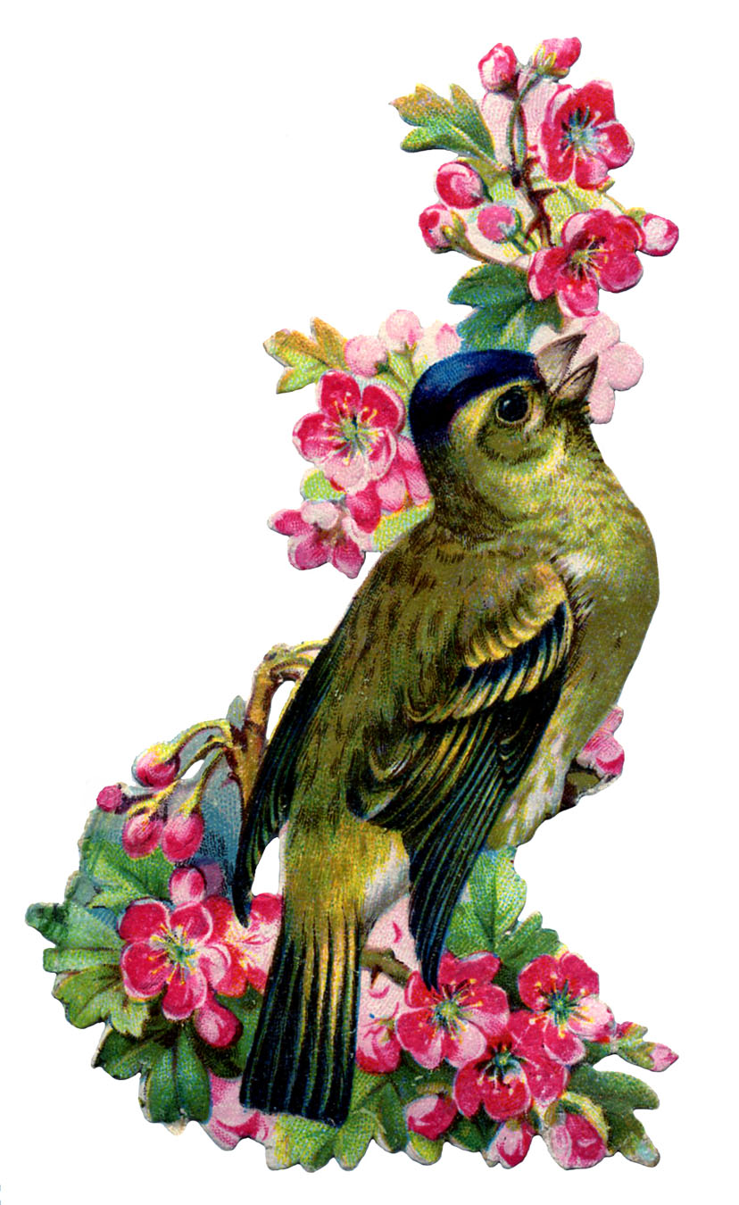 Graphics fairy llc vintage image bird with pink cherry blossoms