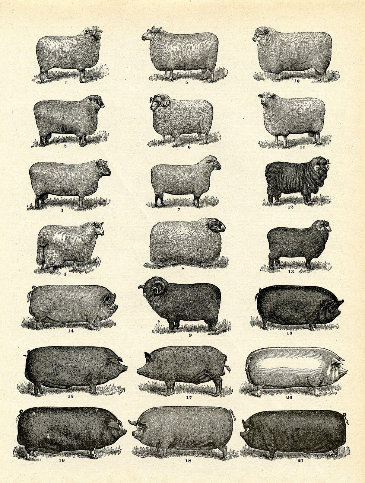 Vintge Printable Download Farm Animals Instant Art