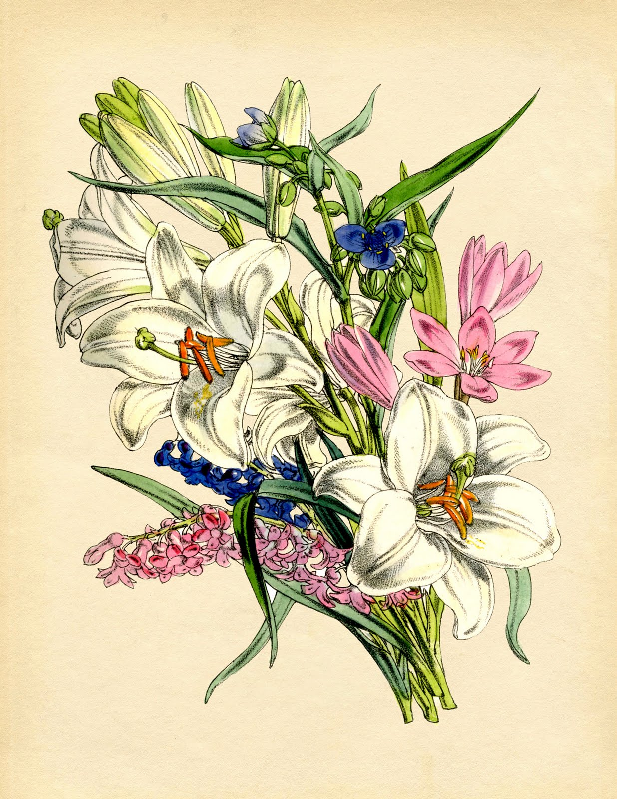 Floral Frame Drawing Graphic Design