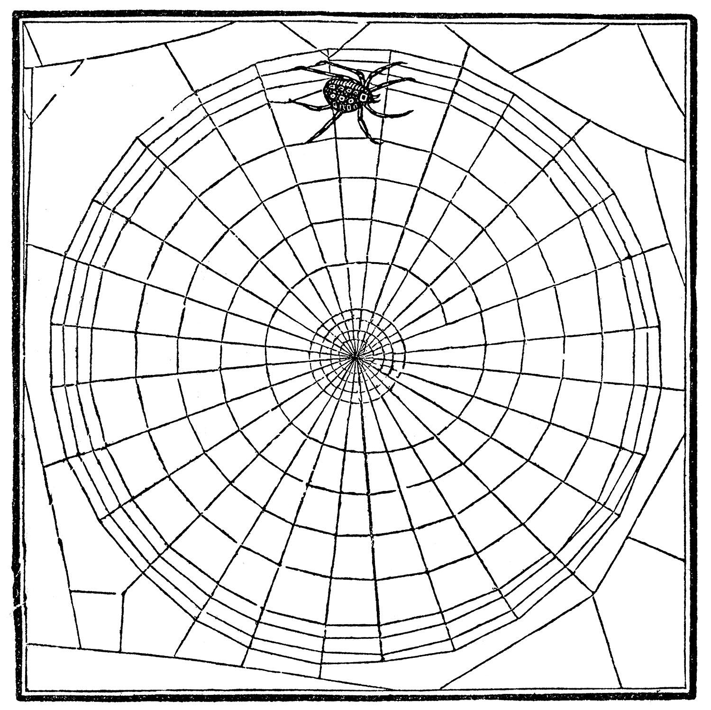 Vintage Clip Art - Spiderweb & Spider - Halloween - The Graphics Fairy