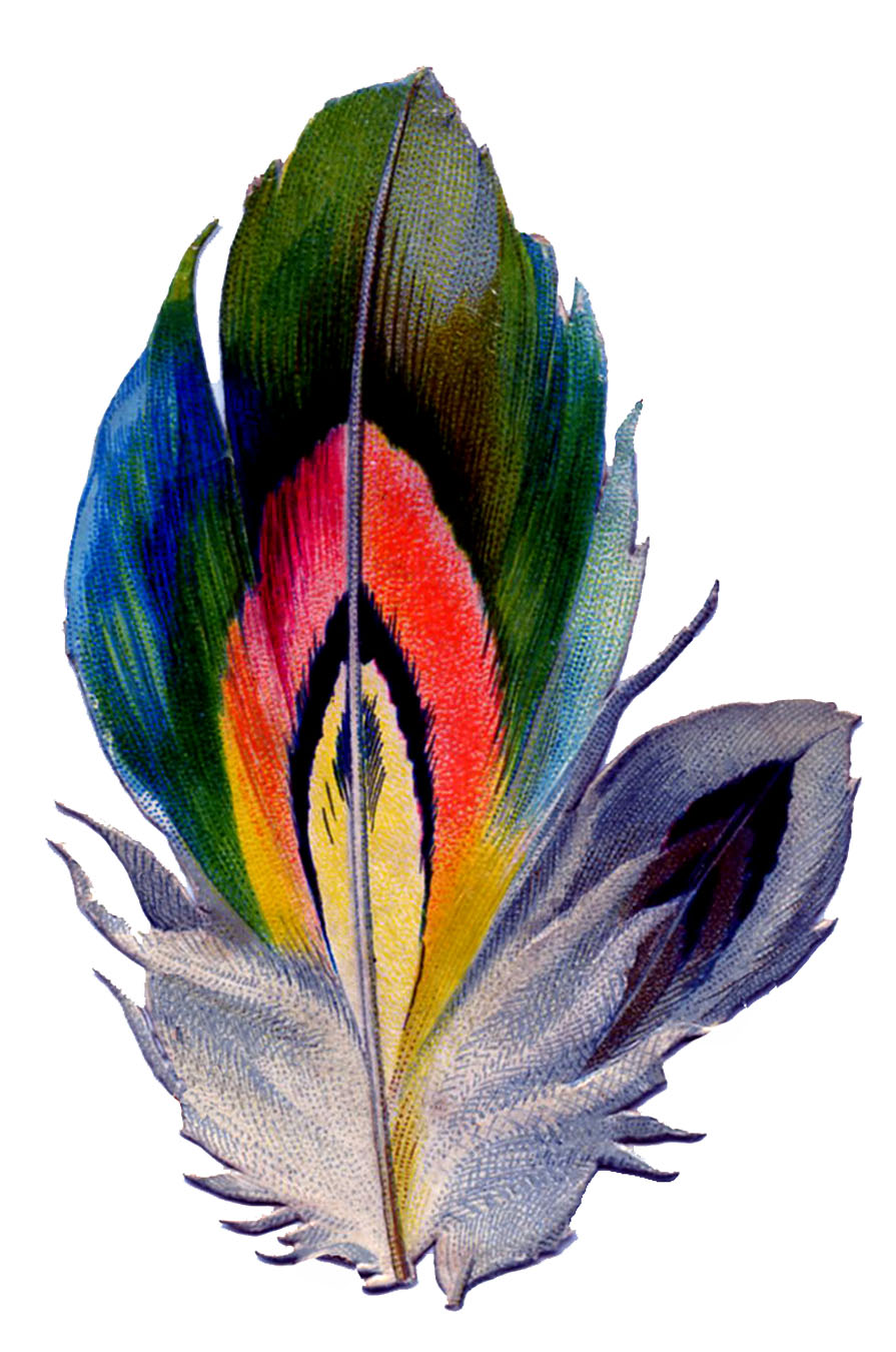 peacock feather border clipart