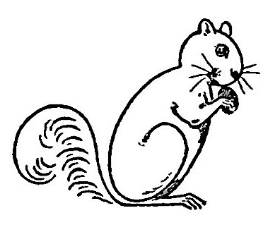 how to draw a cute squirrel