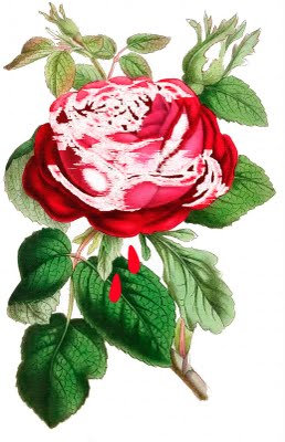 Request Day - The Queen's Rose, Perfume Bottle, Poison Labels, Spinning Wheel, Iris - The Graphics Fairy