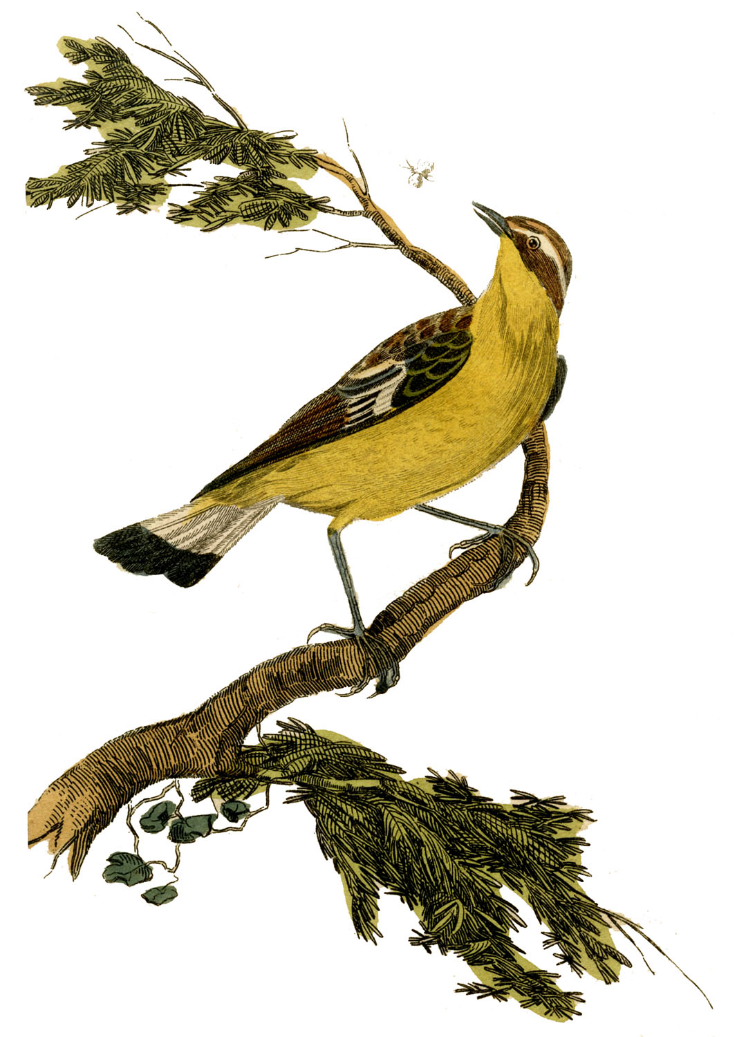 It is an image of Massif Printable Bird Pictures