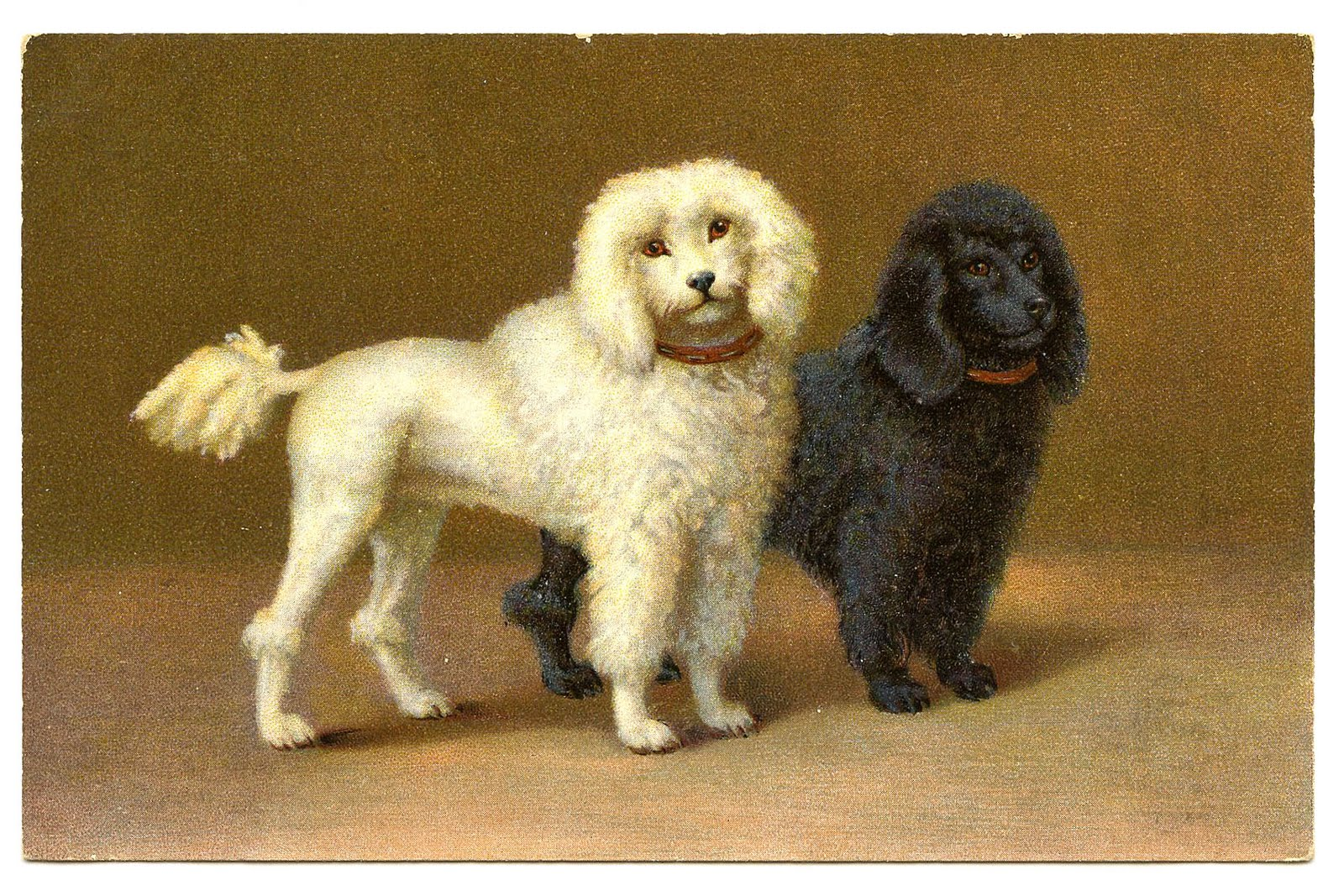 Vintage Clip Art 2 Darling Poodles The Graphics Fairy