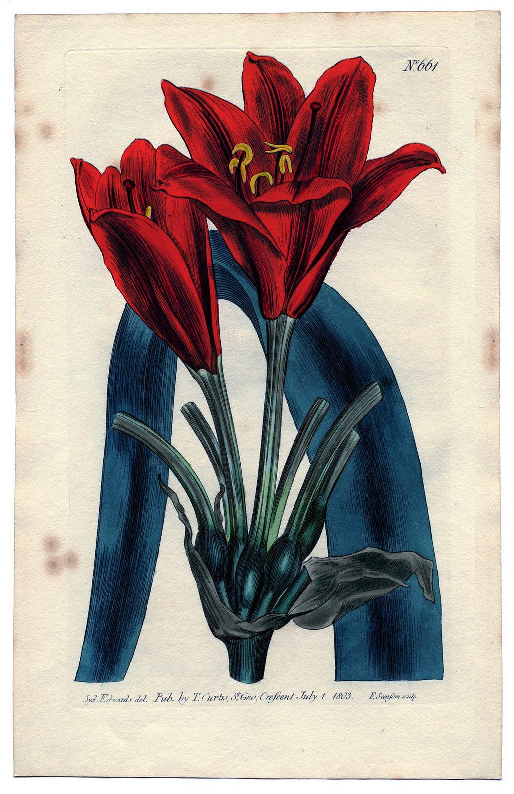 instant art printable red amaryllis botanical the