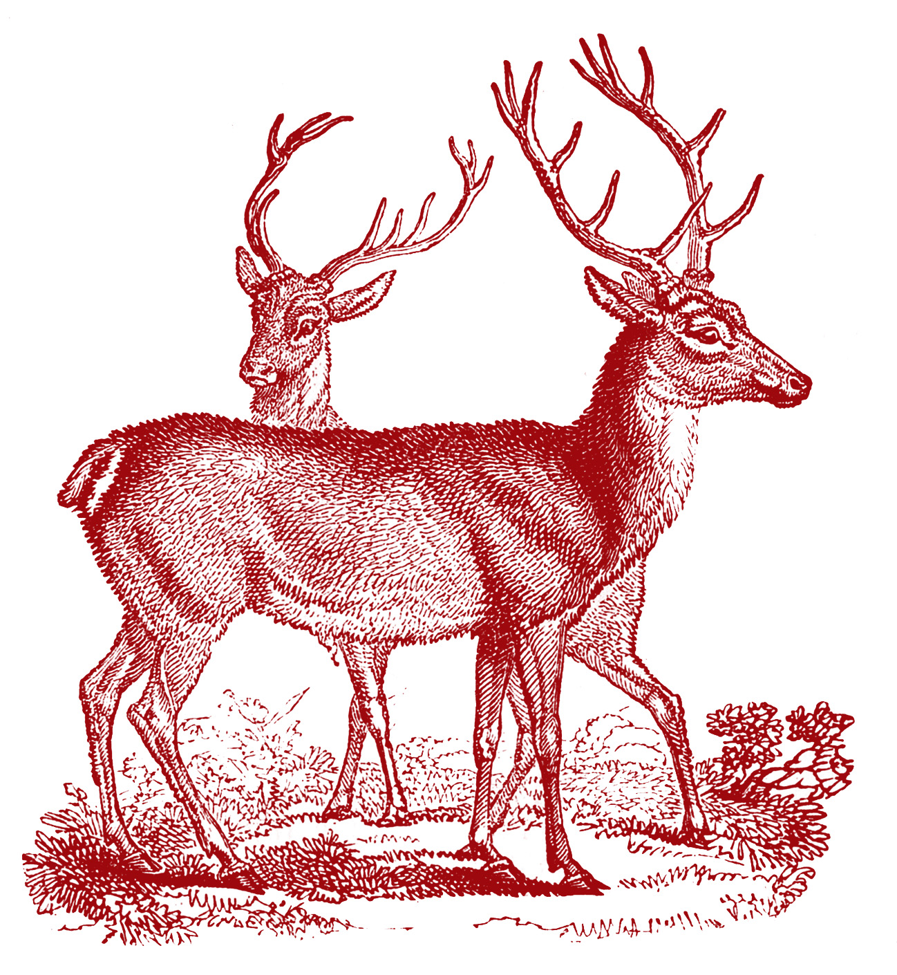 vintage clip art - lovely deer - christmas