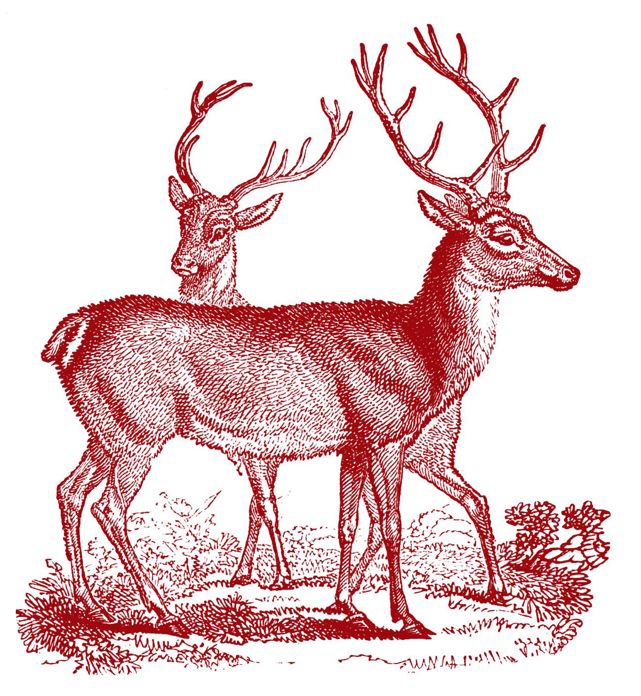 Vintage Clip Art - Lovely Deer - Christmas - The Graphics Fairy