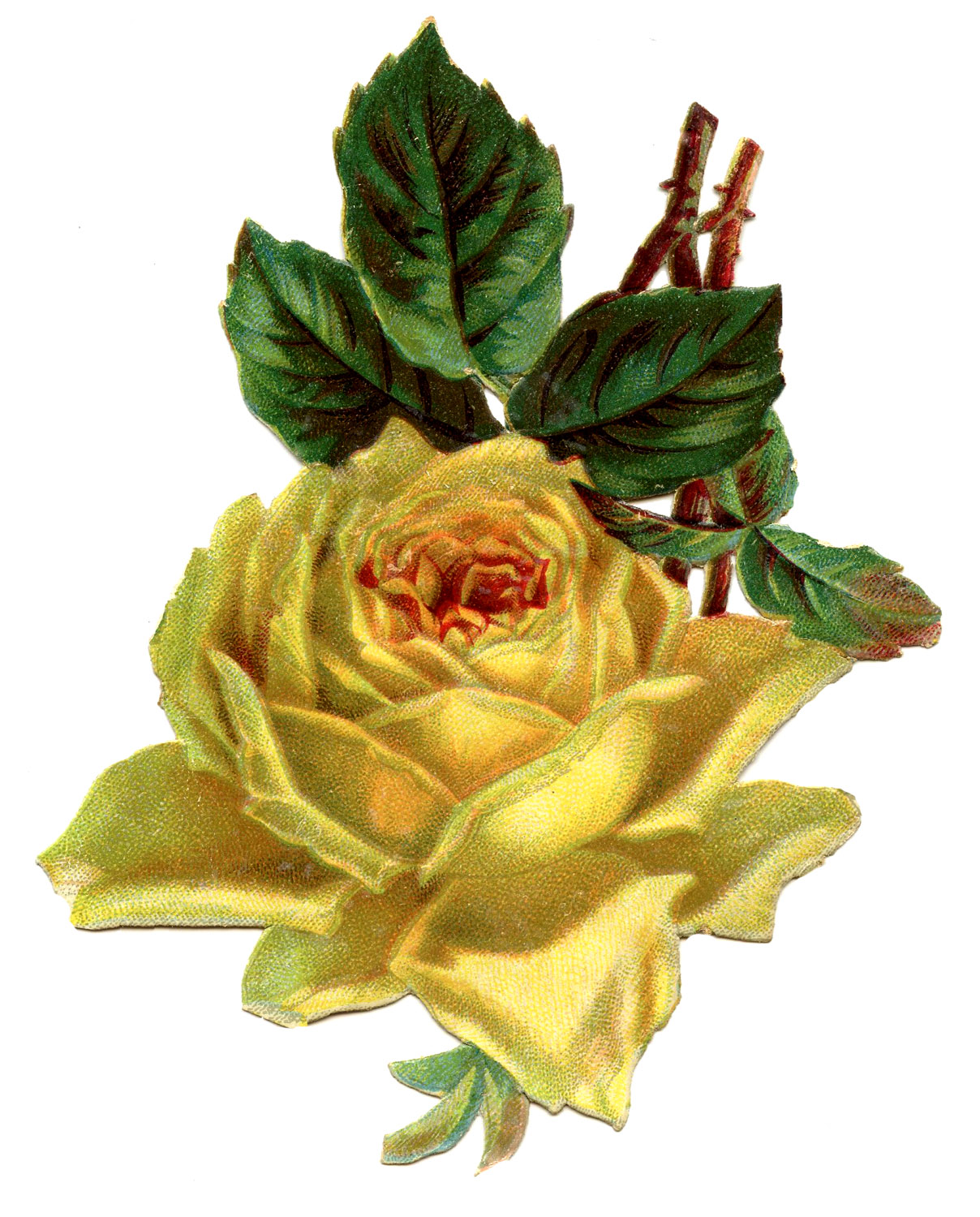 Antique Floral Graphic Beautiful Yellow Rose The Graphics Fairy