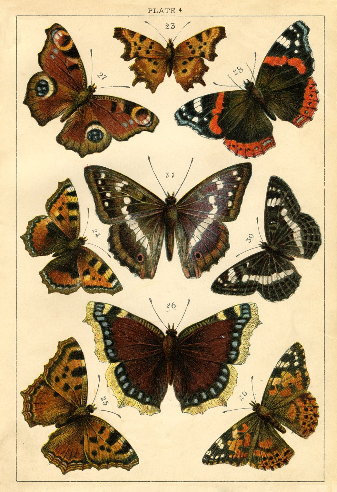 Instant Art Printable - Antique Butterflies and Moths ...