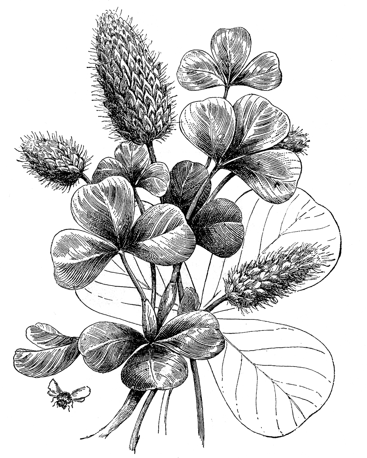 Botanical Flower Drawings Black And White