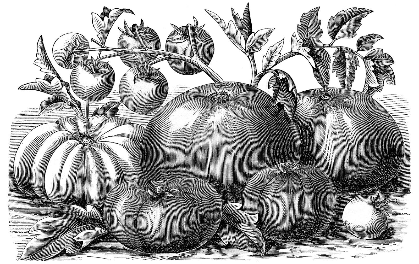 http://thegraphicsfairy.com/wp-content/uploads/blogger/-ziiNoWknEEs/UBAdx-pfUnI/AAAAAAAAS60/4w1GUhhuKv8/s1600/tomatoes-GraphicsFairy.jpg