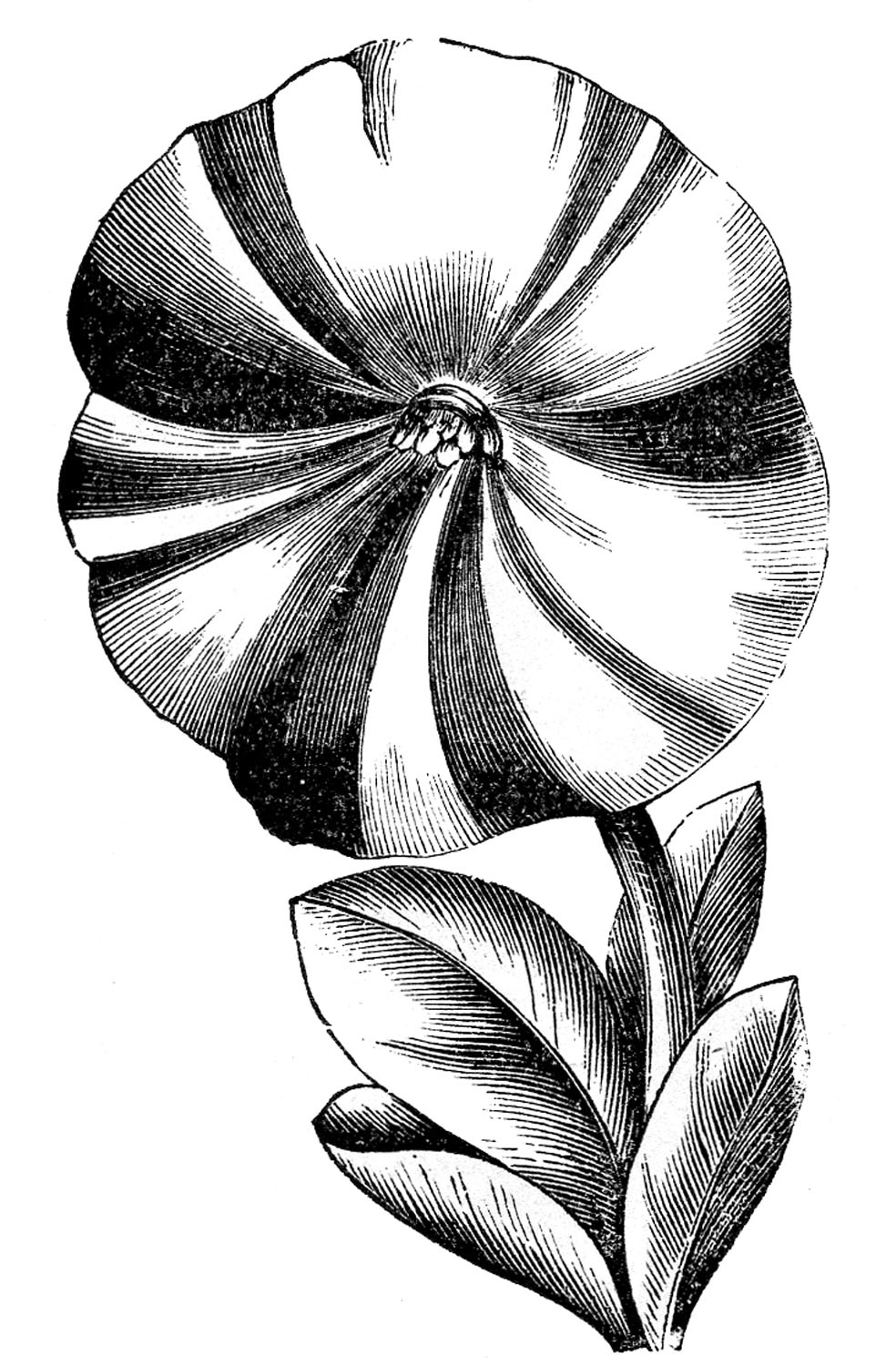 Victorian Flowers Black And White