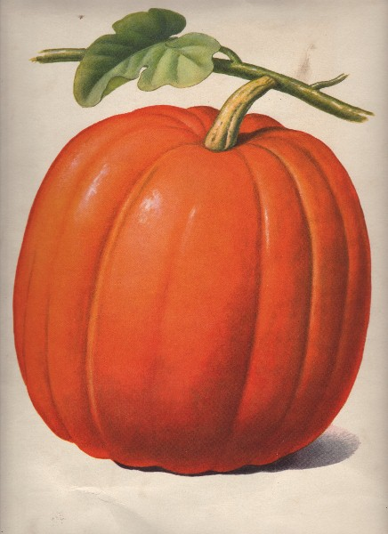 vintage pumpkin clip art - photo #4
