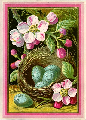 vintage bird nest image with eggs
