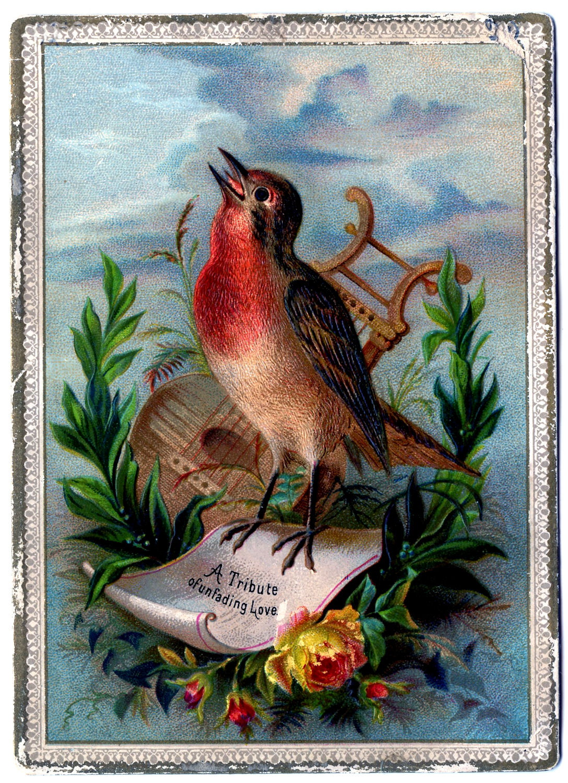 Vintage Clip Art - Amazing Bird Card - Robin - The ...