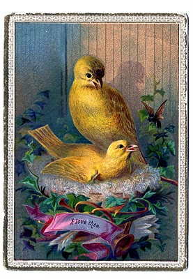 vintage canary bird nest image