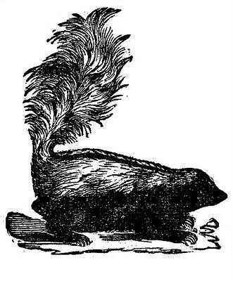 vintage clip art skunk
