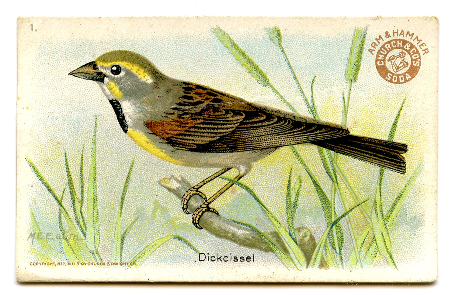 free clipart of vintage birds - photo #19