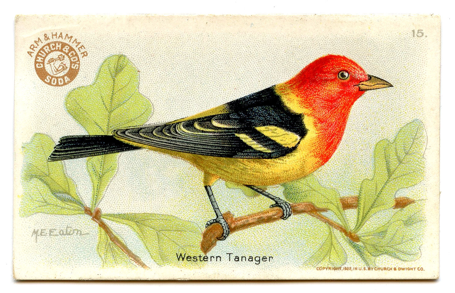 free clipart of vintage birds - photo #12