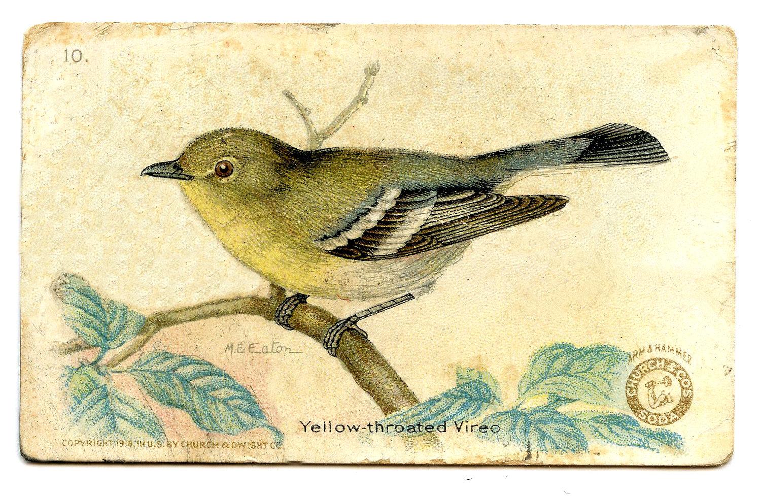 Vintage Bird Clipart 56