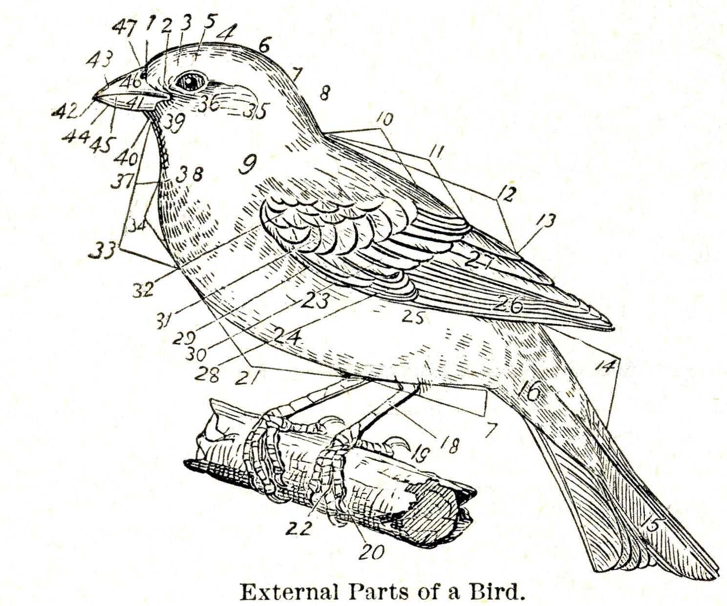 vintage diagram