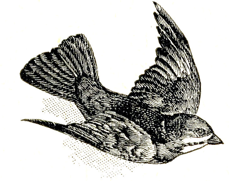 Free Vintage Clip Art - Dictionary Bird Images - The ...
