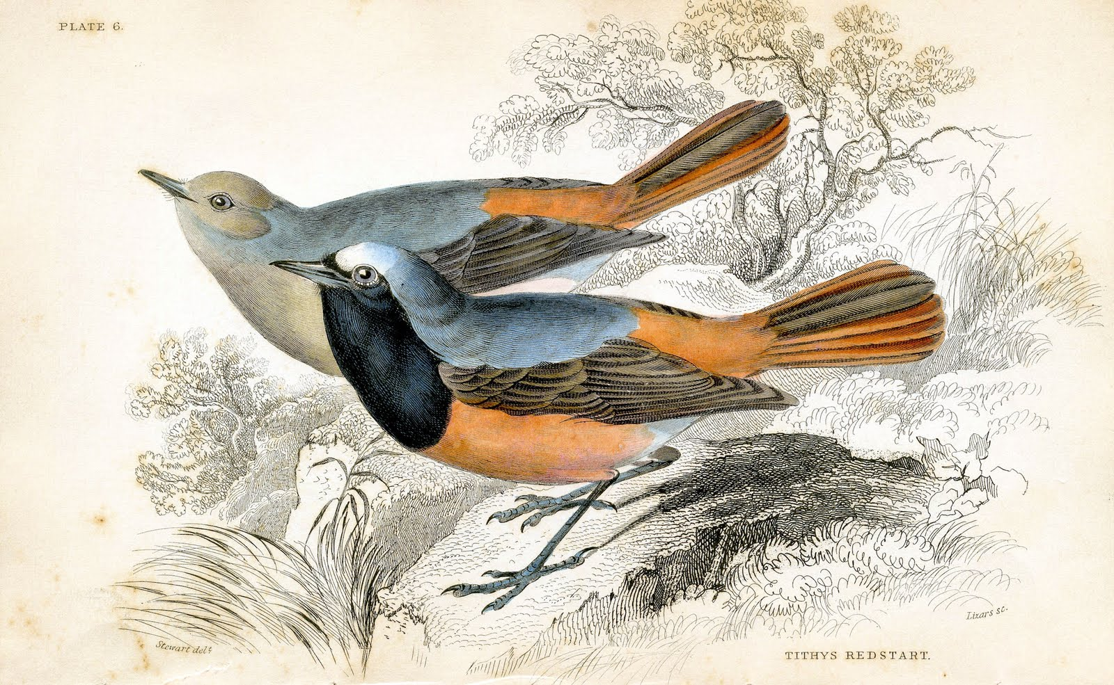 a4b9f3f89dc Antique Clip Art - 1830s Bird Print - The Graphics Fairy