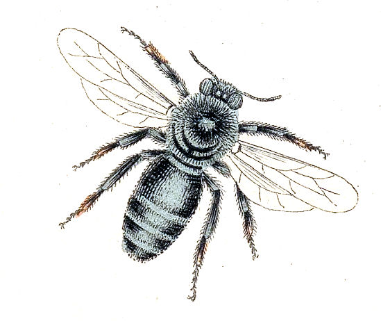 vintage bee clip art - photo #16