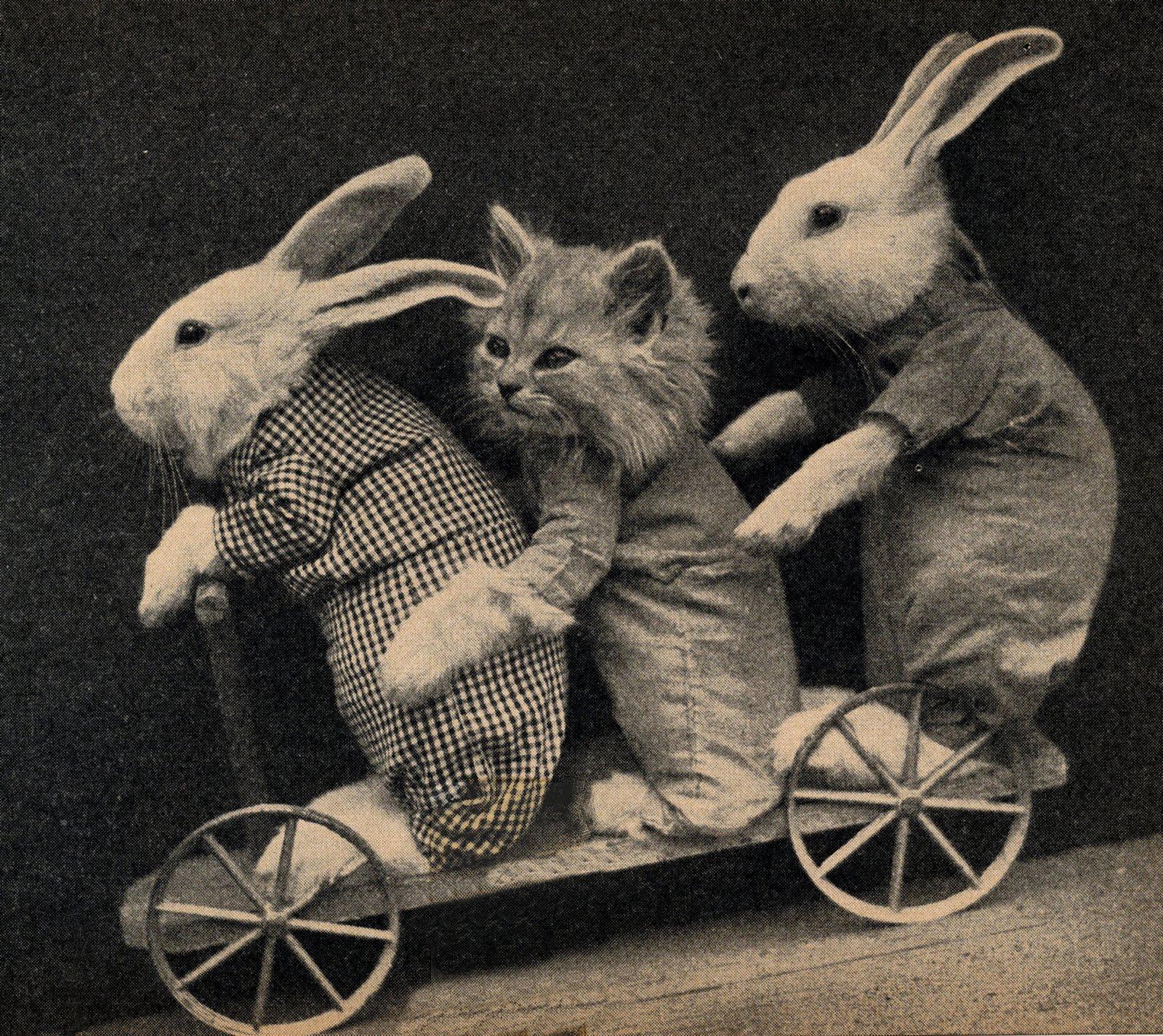 Vintage Clip Art - Bunnies & Kitten - The Graphics Fairy