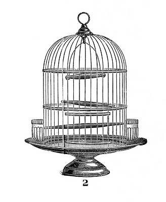 Antique bird cage drawing - photo#42