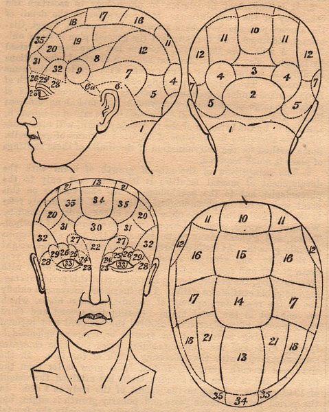 Old Phrenology Head Diagram The Graphics Fairy