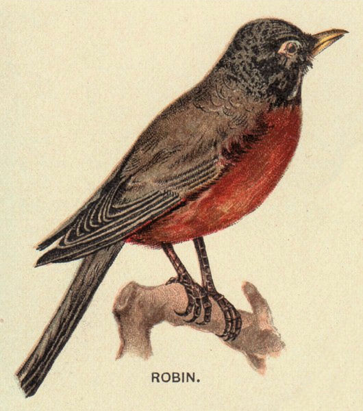 Vintage Bird Graphic - Robin - The Graphics Fairy